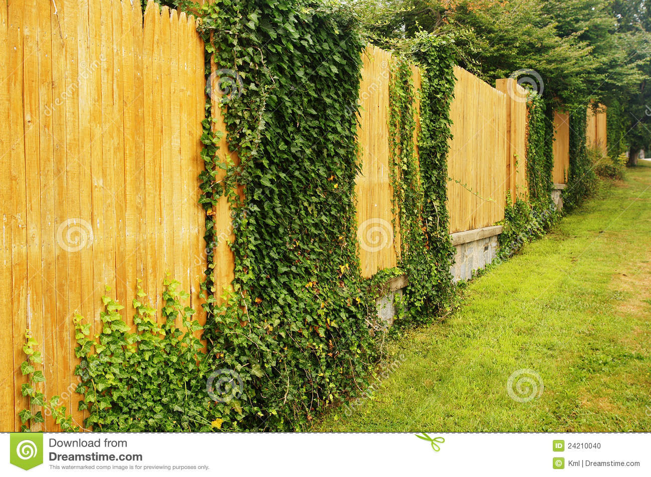 Ivy On A Fence Stock Photo Image Of Wood Plant Hanging