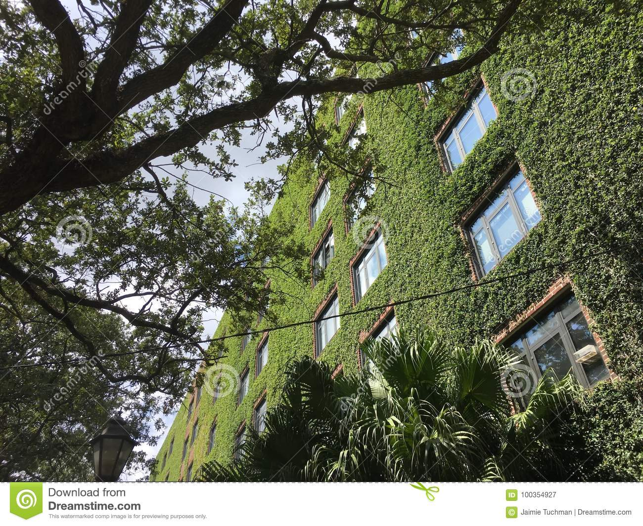 Download Ivy Walls On A Tall Brick Apartment Building Stock Image   Image  Of Foliage,