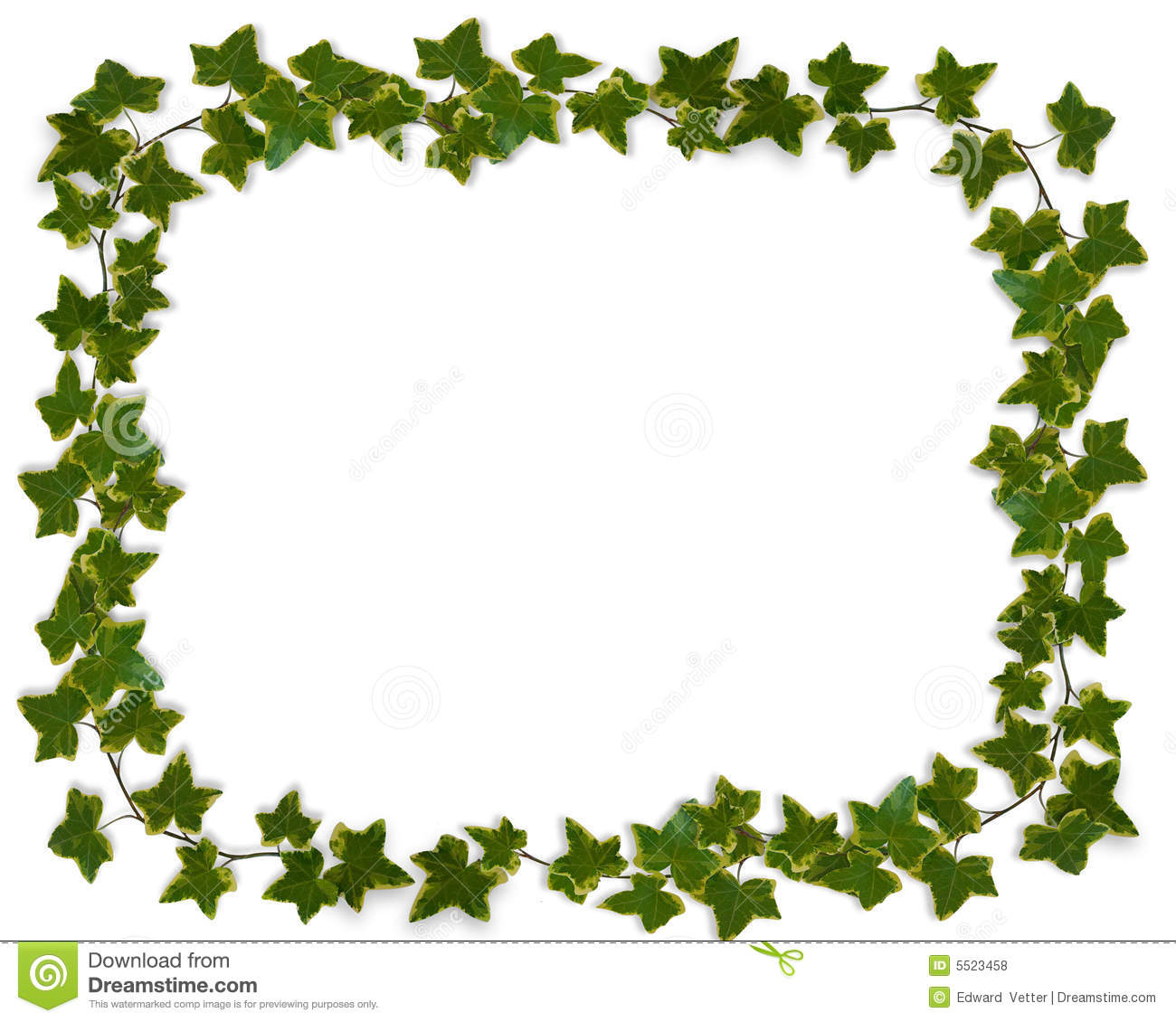 Ivy Leaves Border Stock Illustration Of Artistic