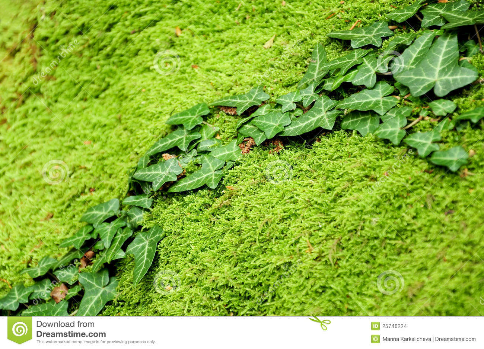 Ivy on mossy stone