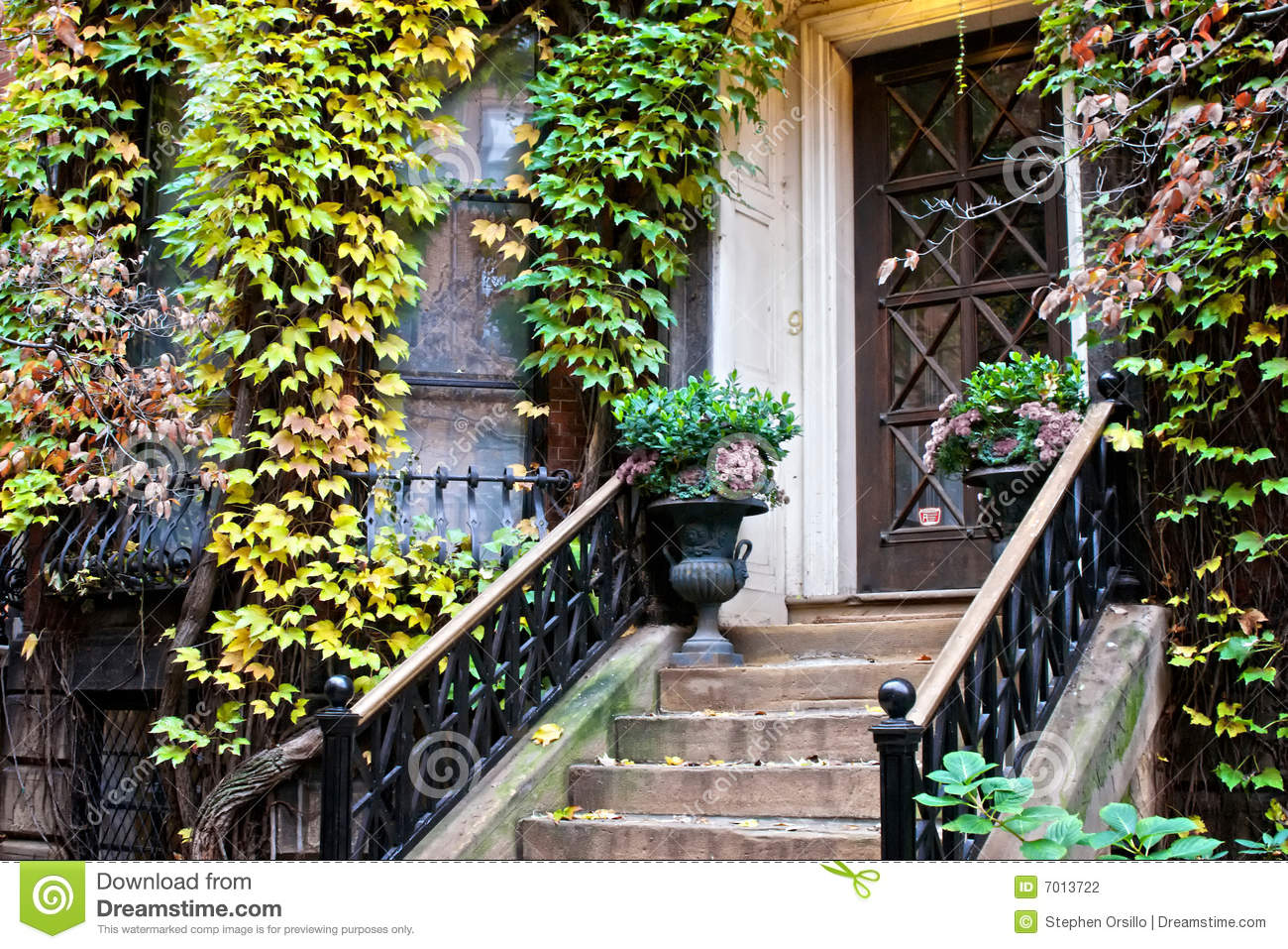 Ivy plants on old home stock photo image of victorian for Classic house plants