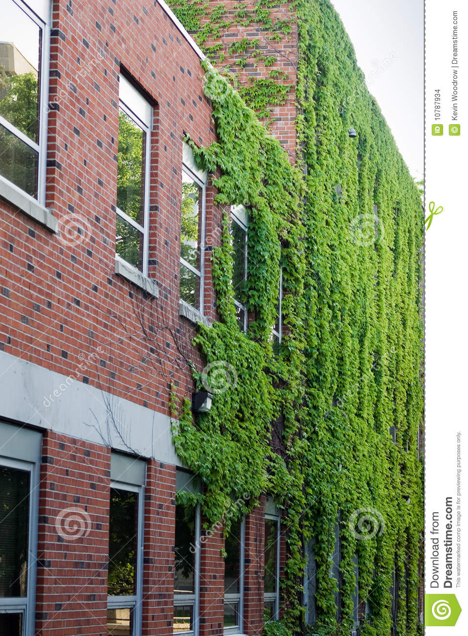 Ivy On A Red Brick Building Stock Photo Image Of