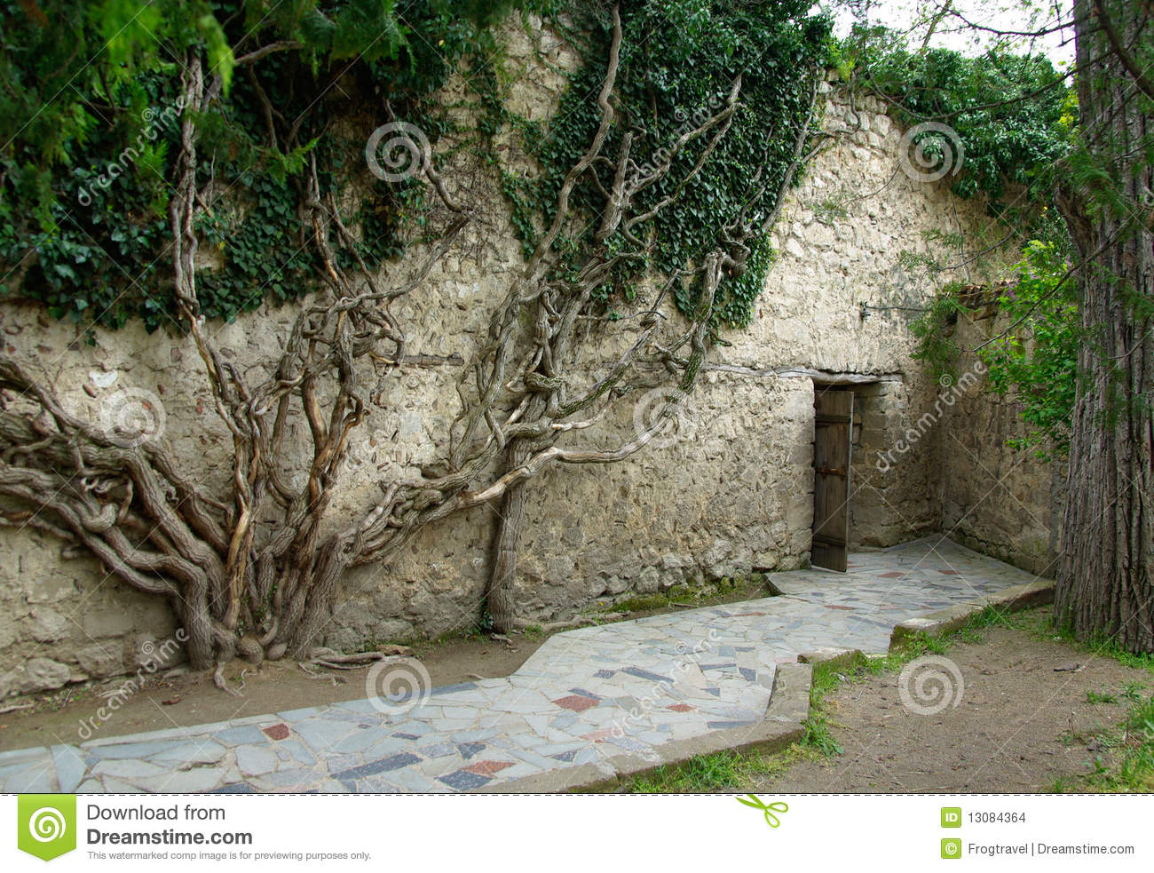 Ivy Vines Stock Images - Image: 13084364