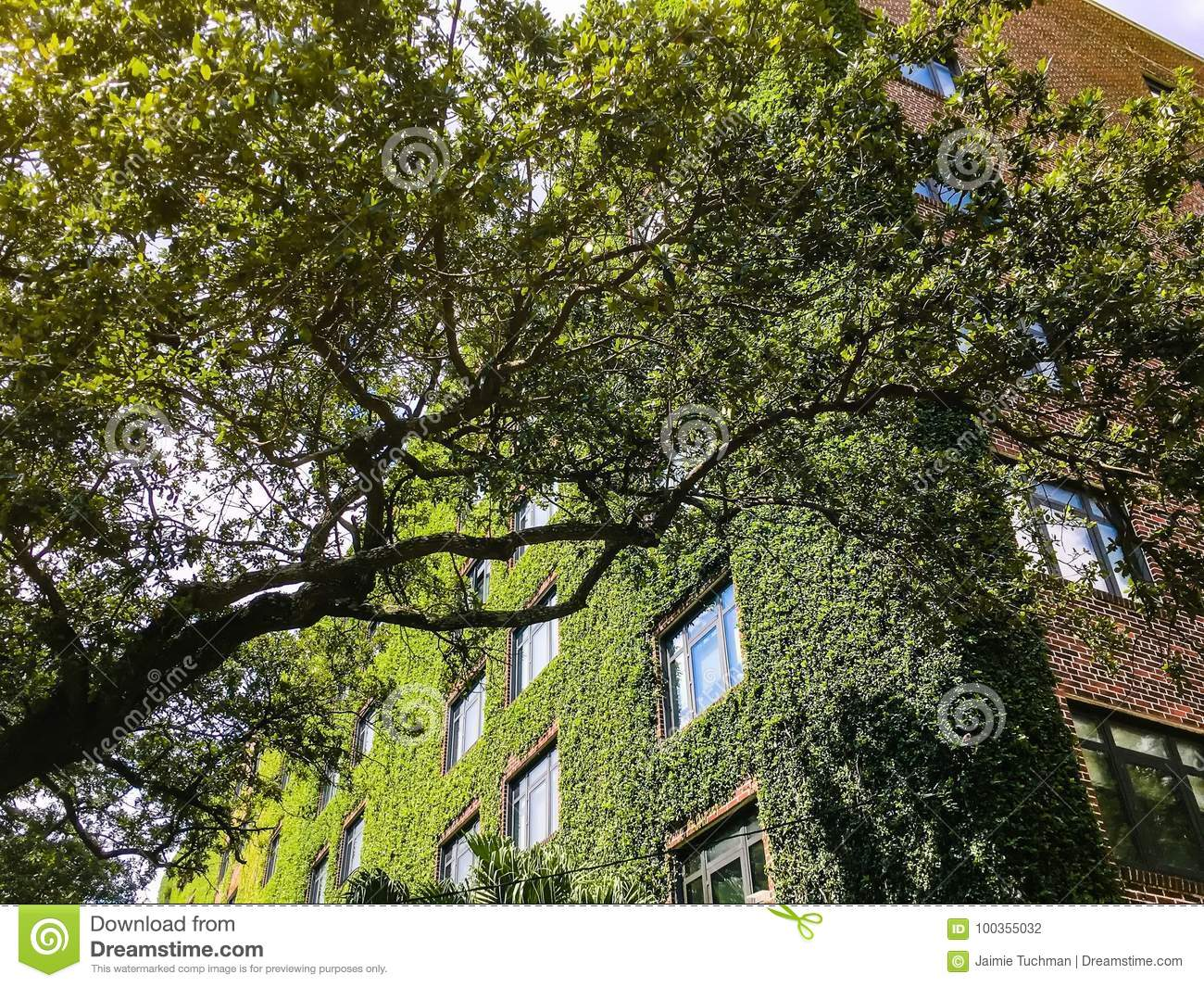 ivy walls on a tall brick apartment building stock photo image 100355032. Black Bedroom Furniture Sets. Home Design Ideas