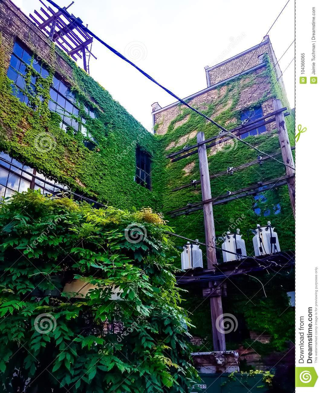 Download Ivy Walls On A Tall Brick Apartment Building Stock Image   Image  Of Modern,