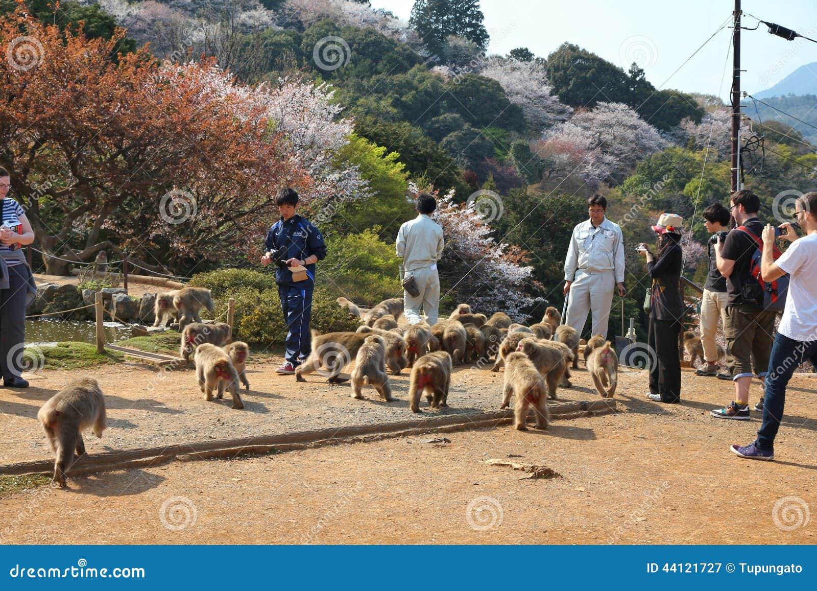 Iwatayama Monkey Park Editorial Photography
