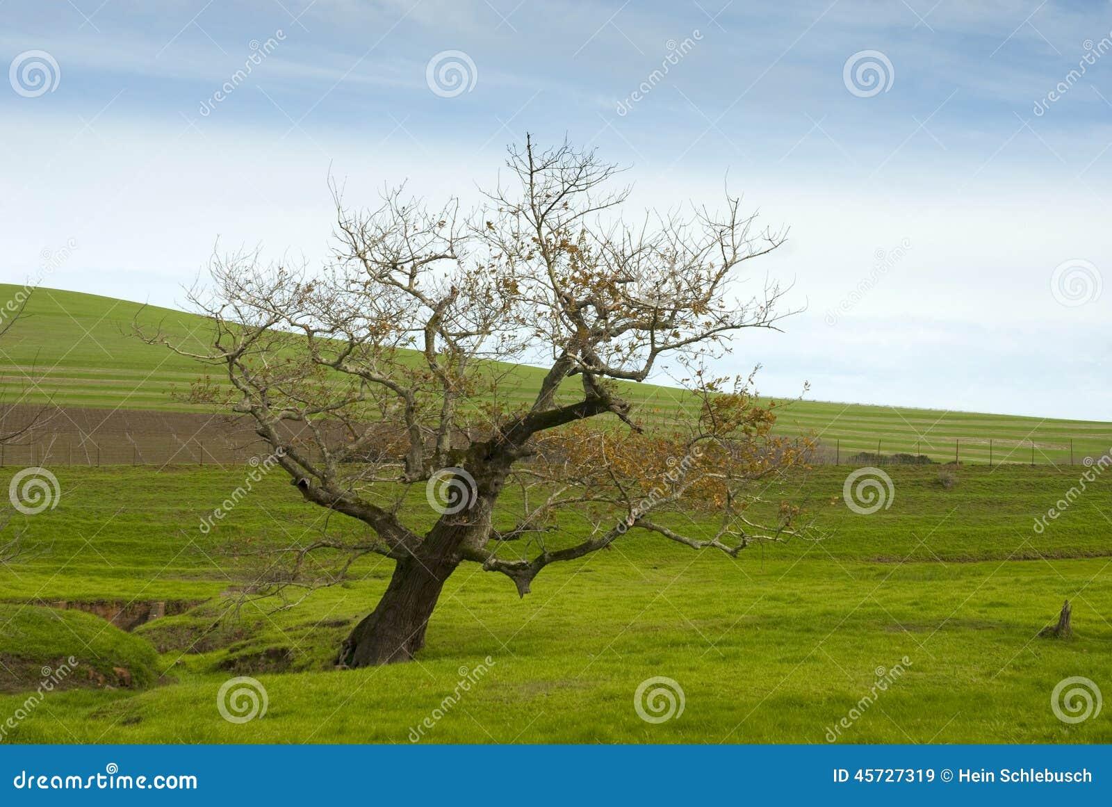 Jałowy drzewo w trawy łące