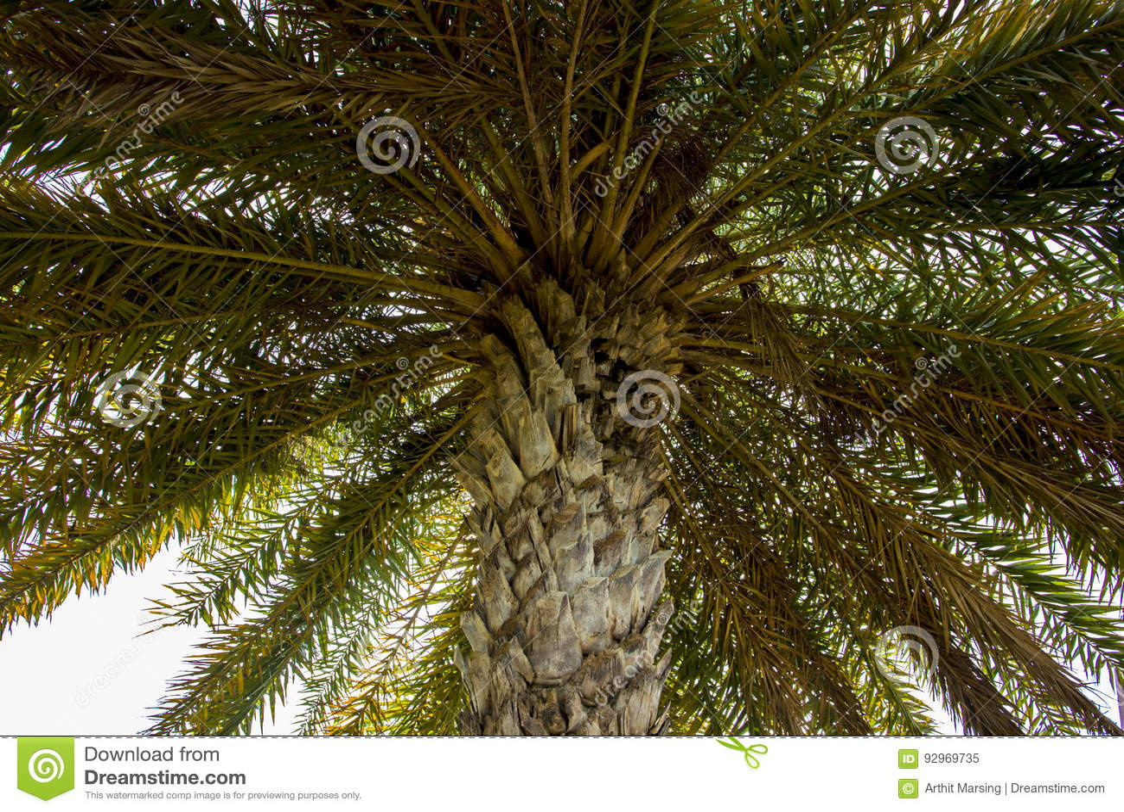 Ja i drzewko palmowe opuszczamy pod drzewem i patrzejemy do podczas gdy pobyt wierzchołka i liści