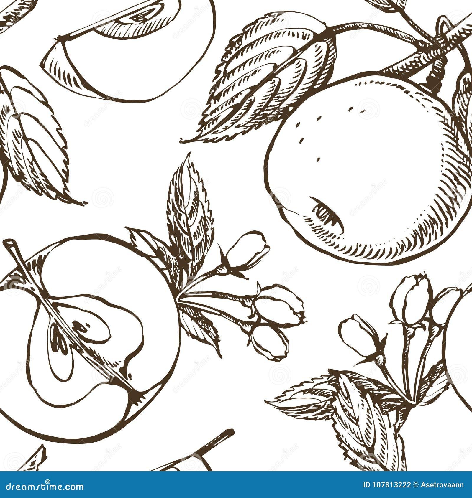 Jabłczana okwitnięcie gałąź odizolowywająca na bielu Rocznik botaniczna ręka rysująca ilustracja Wiosna kwiaty jabłoń