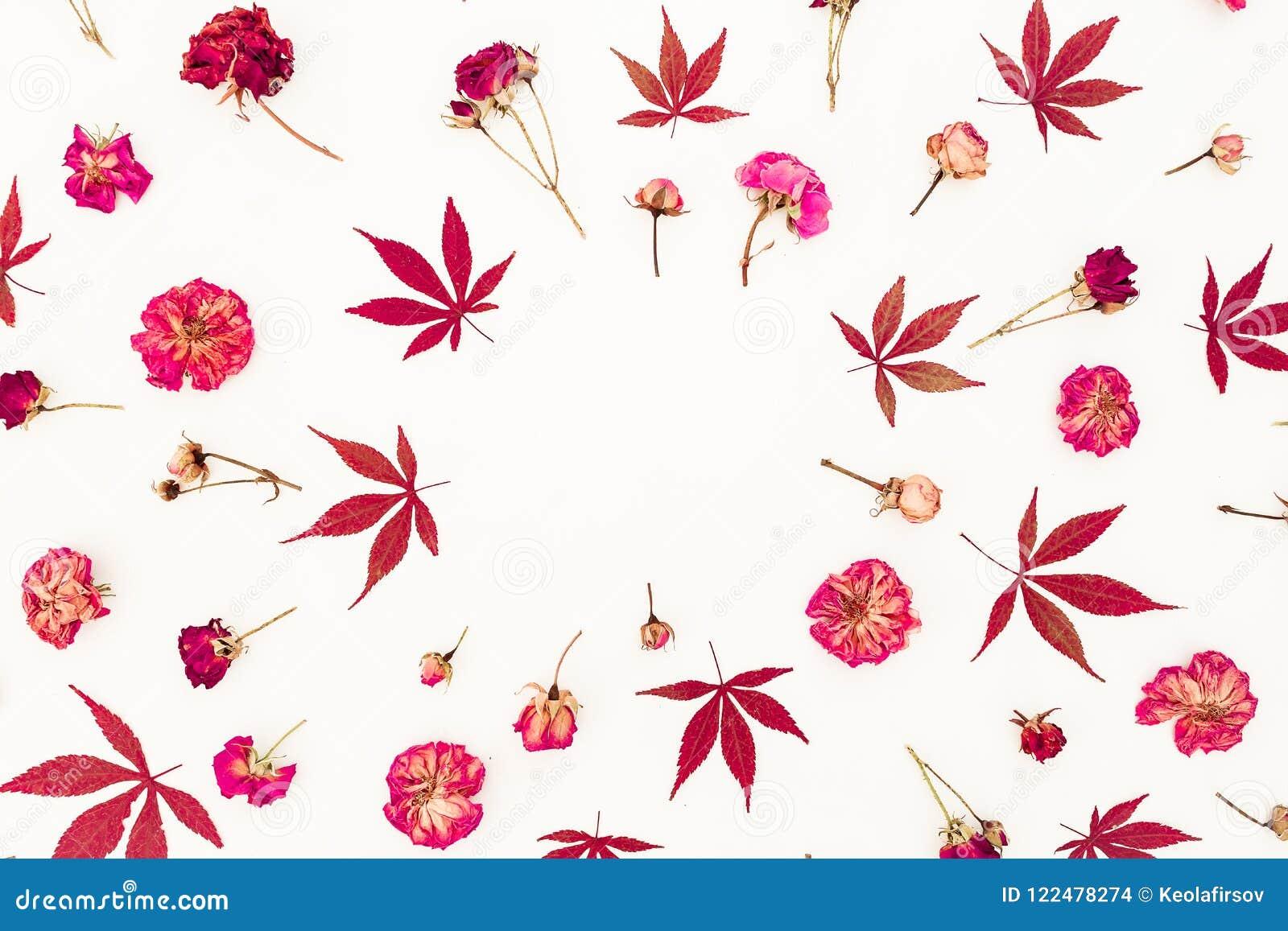Jabłczanego jesień świeczek składu susi liść target2422_0_ wazę Rama robić jesień suszący róża kwiaty i liście na białym tle Mies