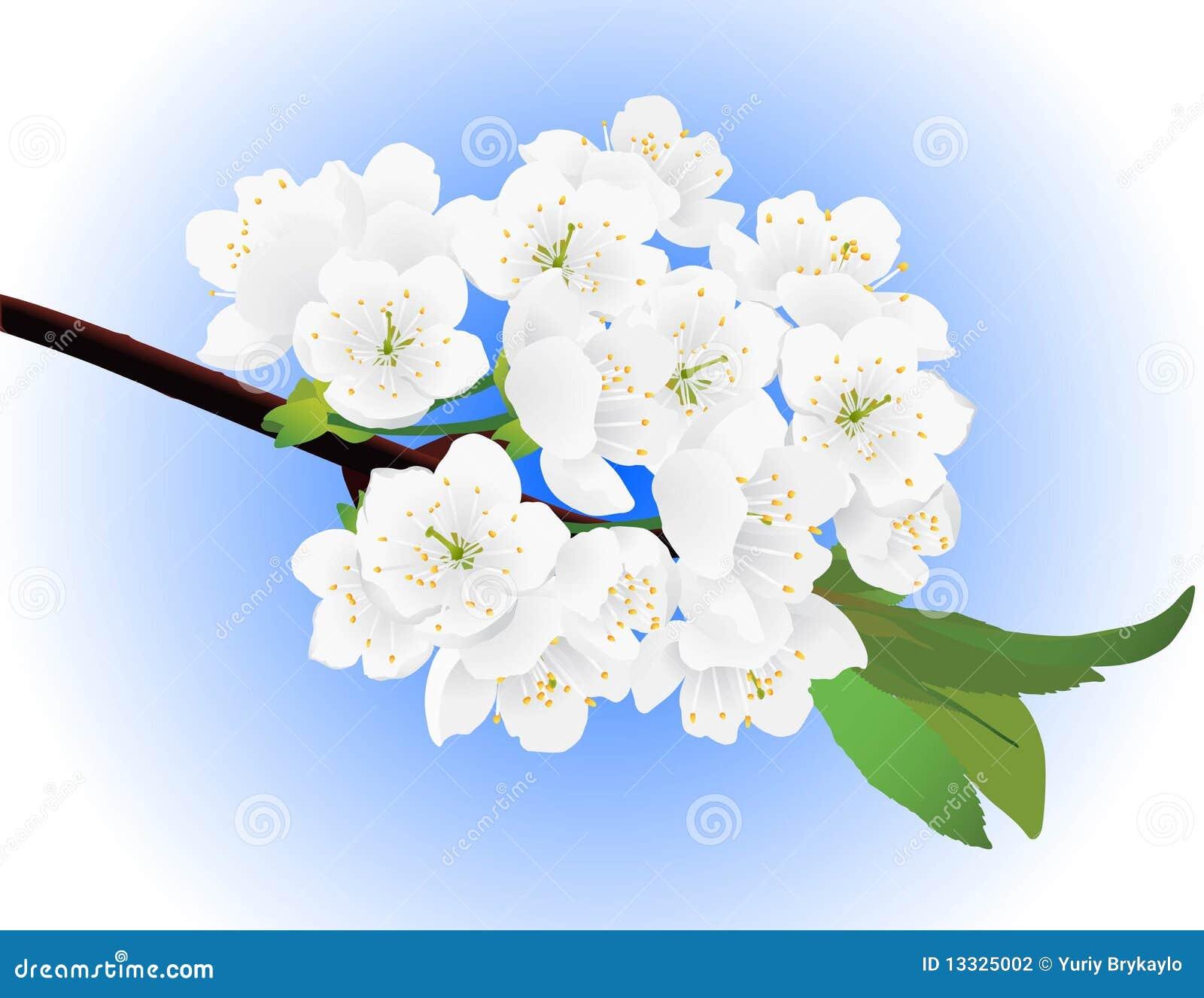 Jabłczanej wiosna drzewna gałązka