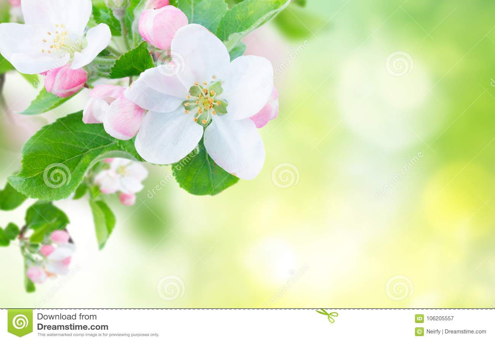 Jabłczany okwitnięcia zakończenia drzewo jabłczany