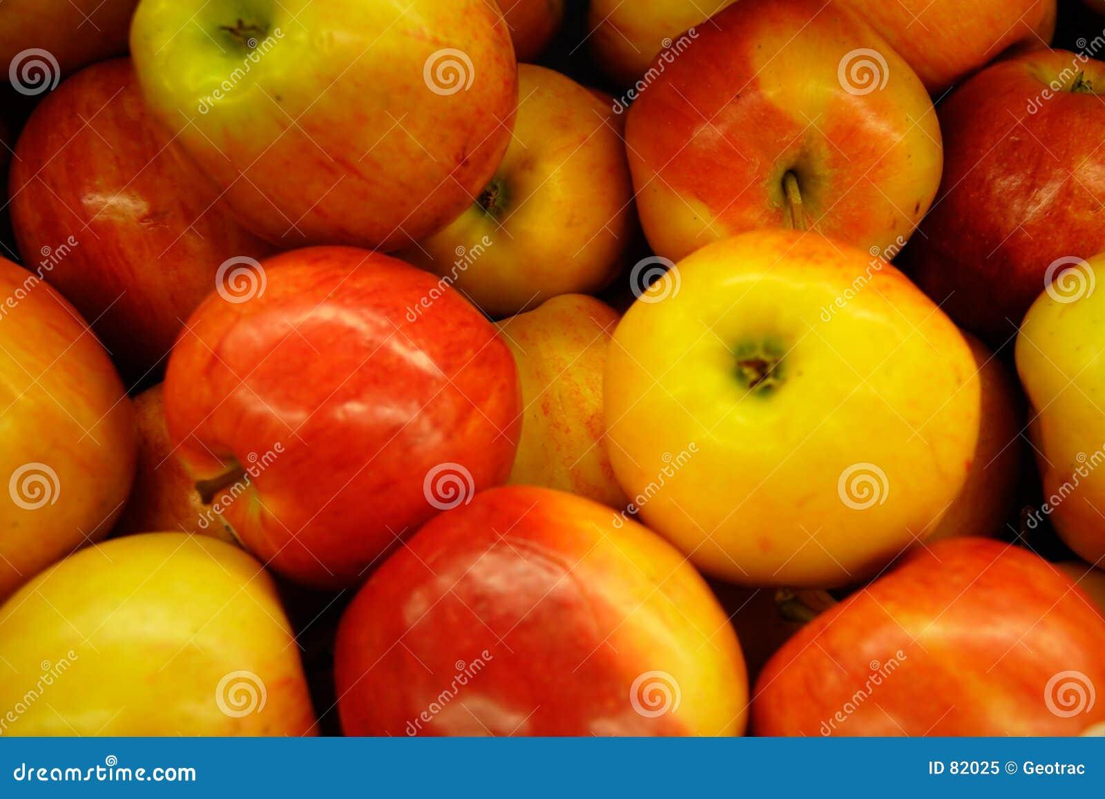 Jabłka galowi