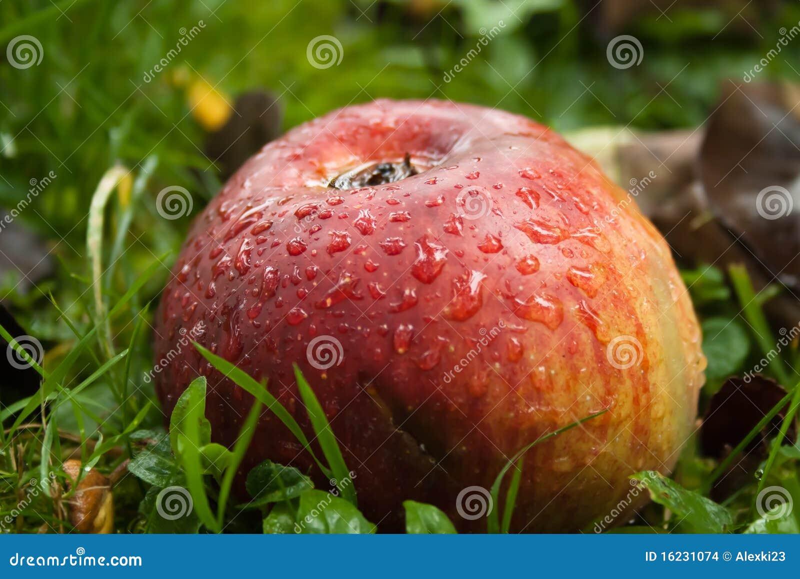 Jabłko mokry