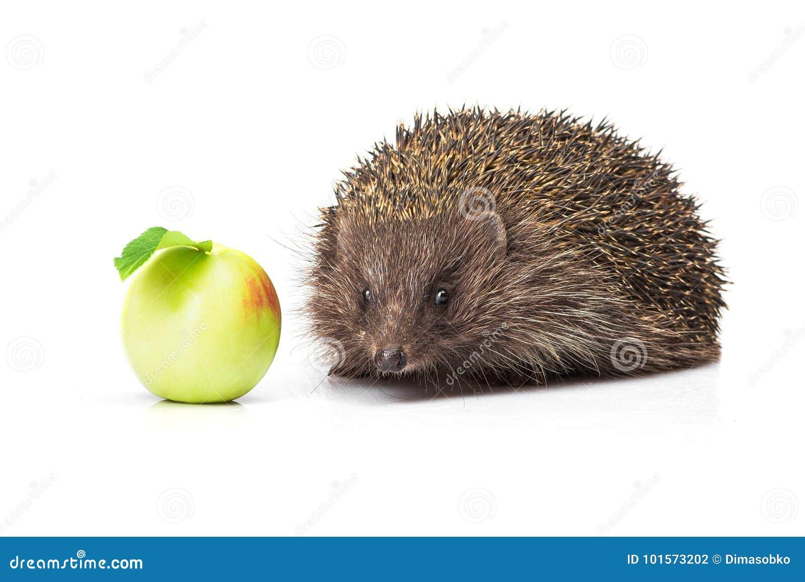 Jabłko - zielony jeż