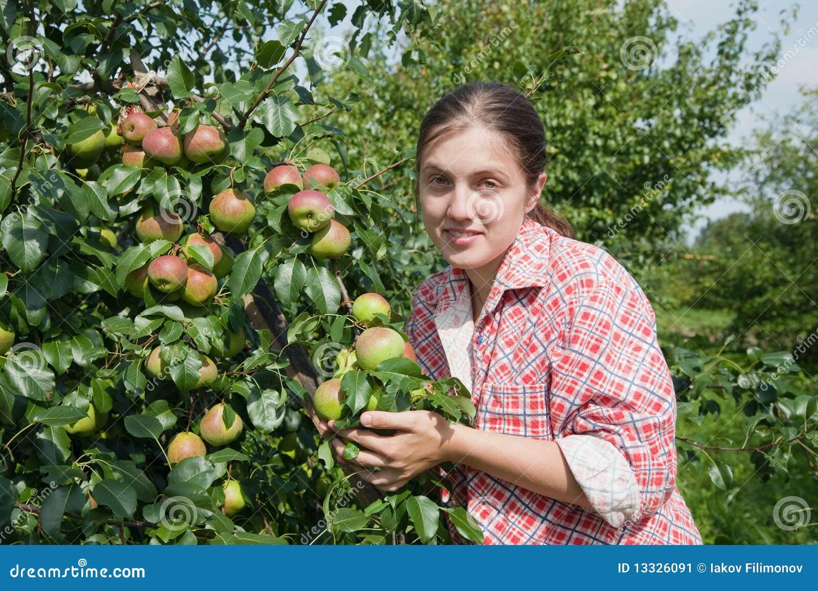 Jabłek dziewczyny zrywanie