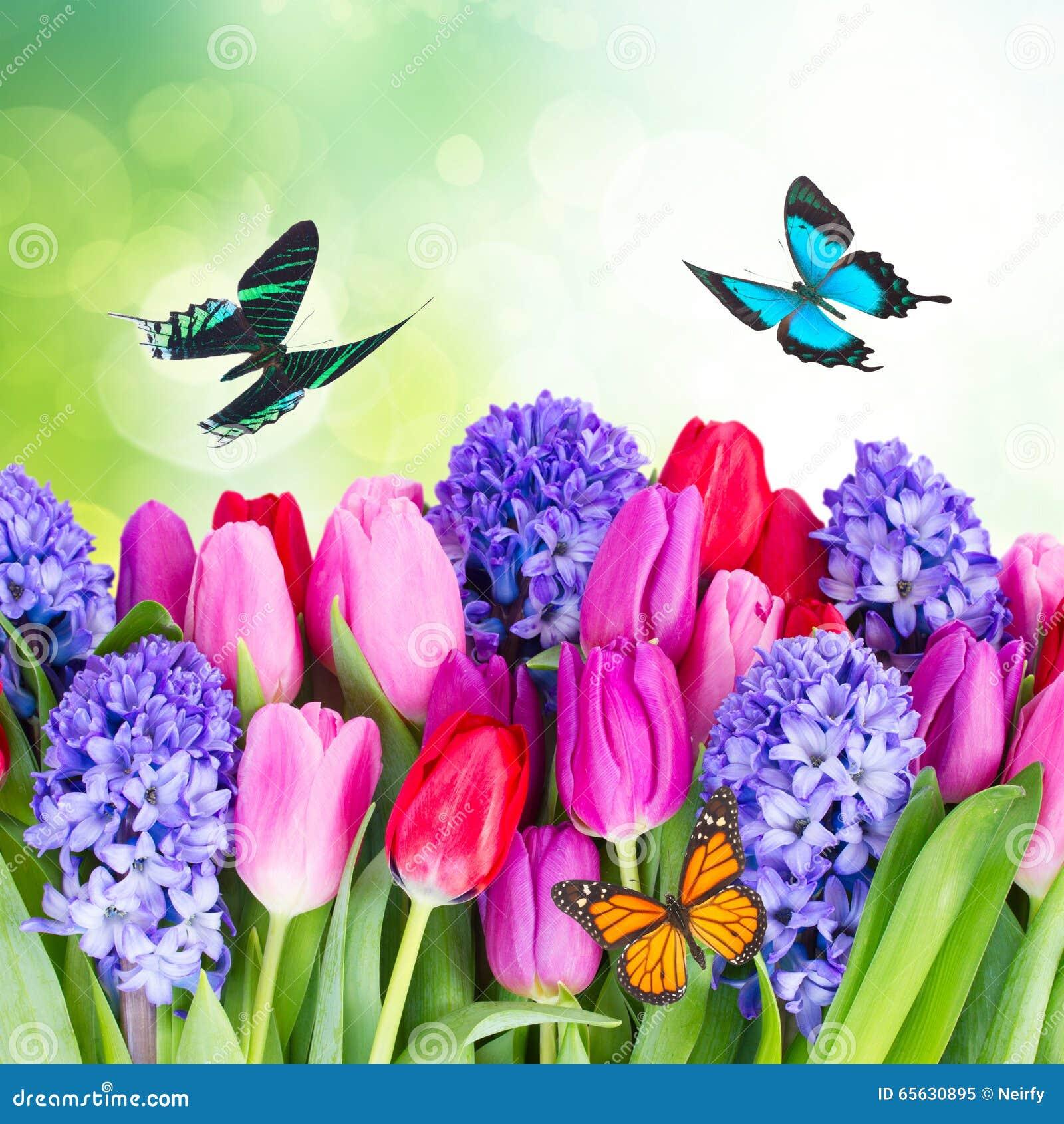 Jacinthe et tulipes bleues
