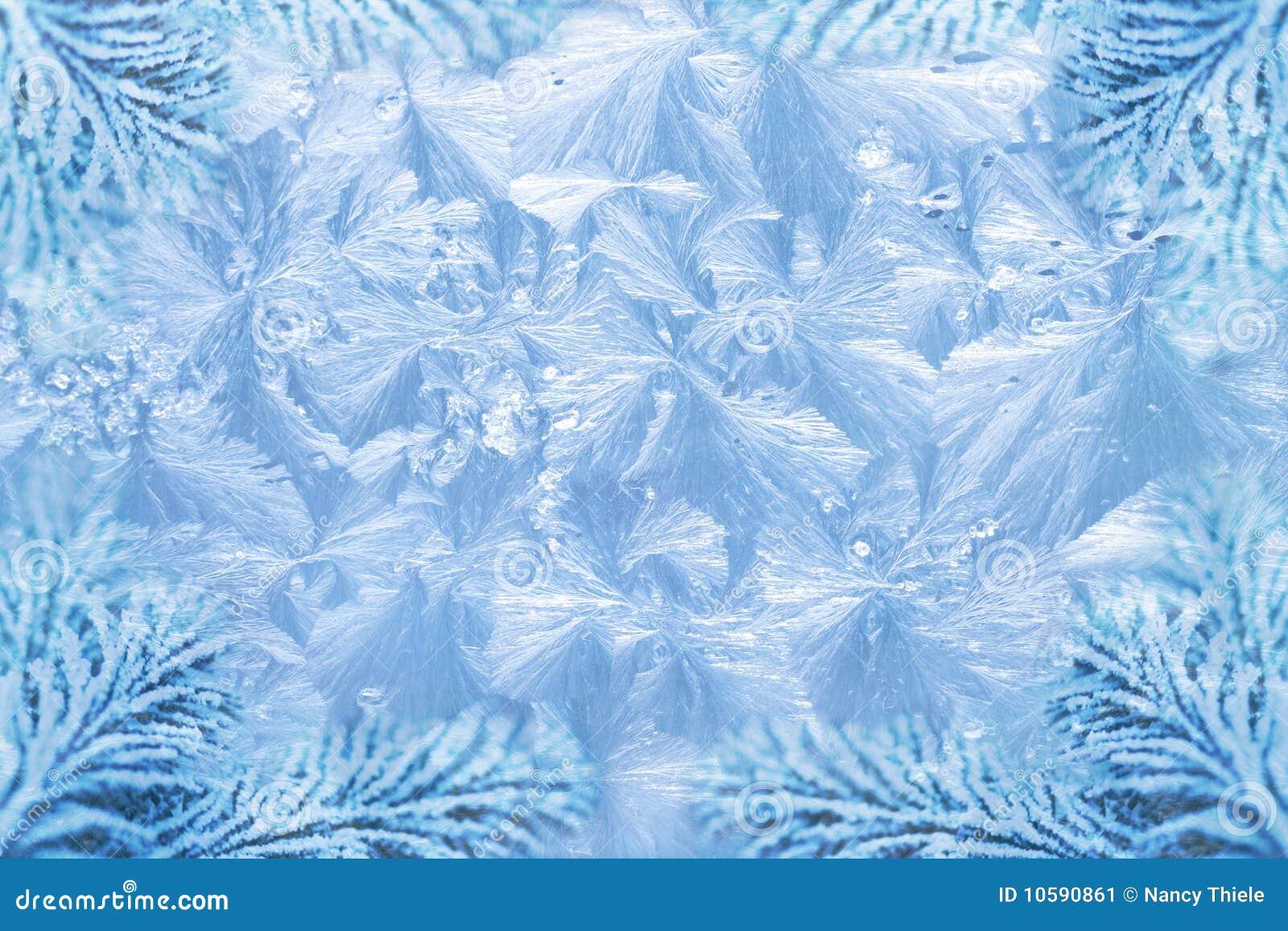 Jack frost ice crystal patterns & snowy spruce
