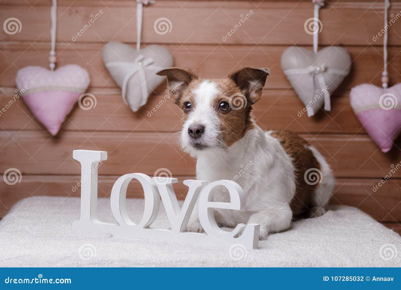 Jack lindo Russell Terrier Día del `s de la tarjeta del día de San Valentín
