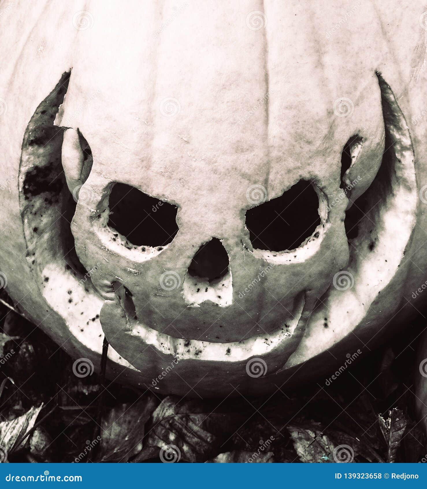 Jack O Lantern Pumpkin Halloween Skull Stock Photo Image Of Orange Holiday 139323658