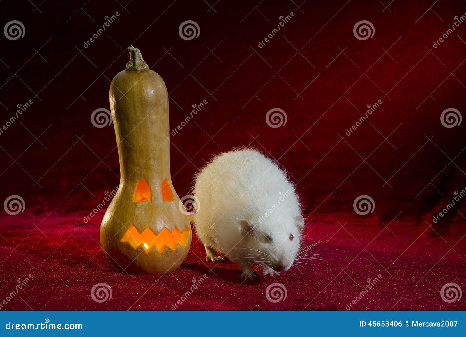 Jack-o -lantern and rat.