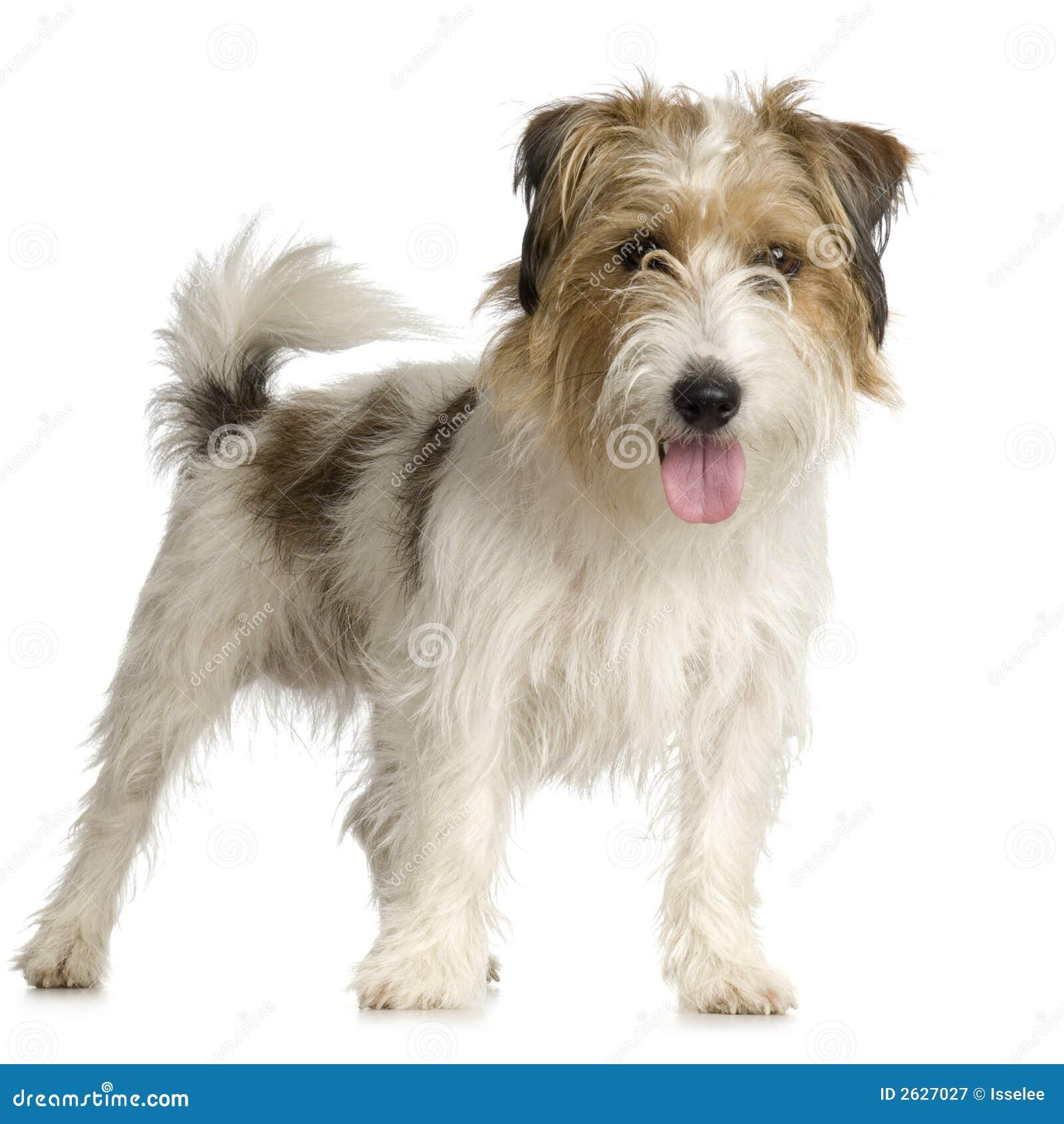 Best Dog Collar For Long Hair