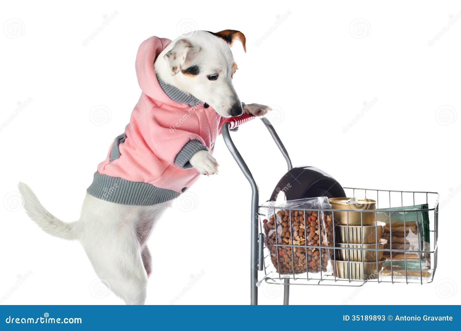 Nutrition Pet Food Store