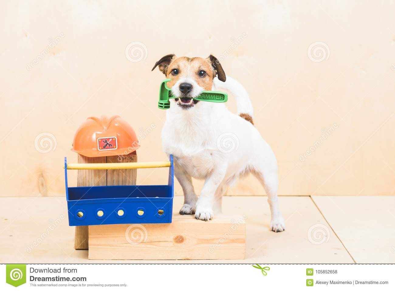 Do it yourself diy concept with funny dog as builders assistant download do it yourself diy concept with funny dog as builders assistant stock photo image solutioingenieria Images