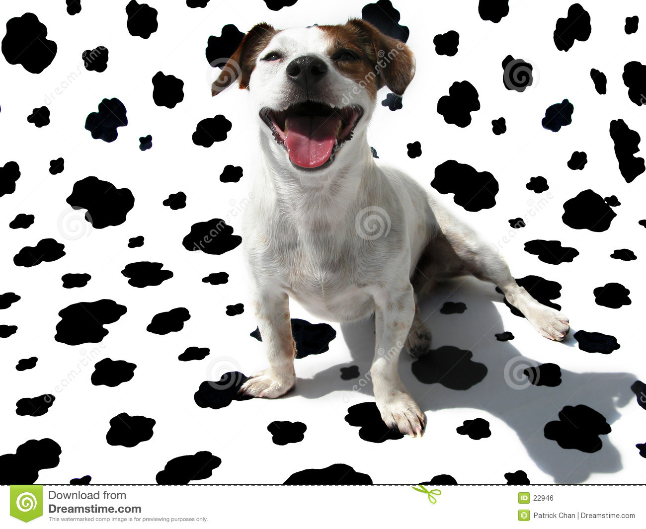 Jack Russell Terrier JRT on Cow Canvas