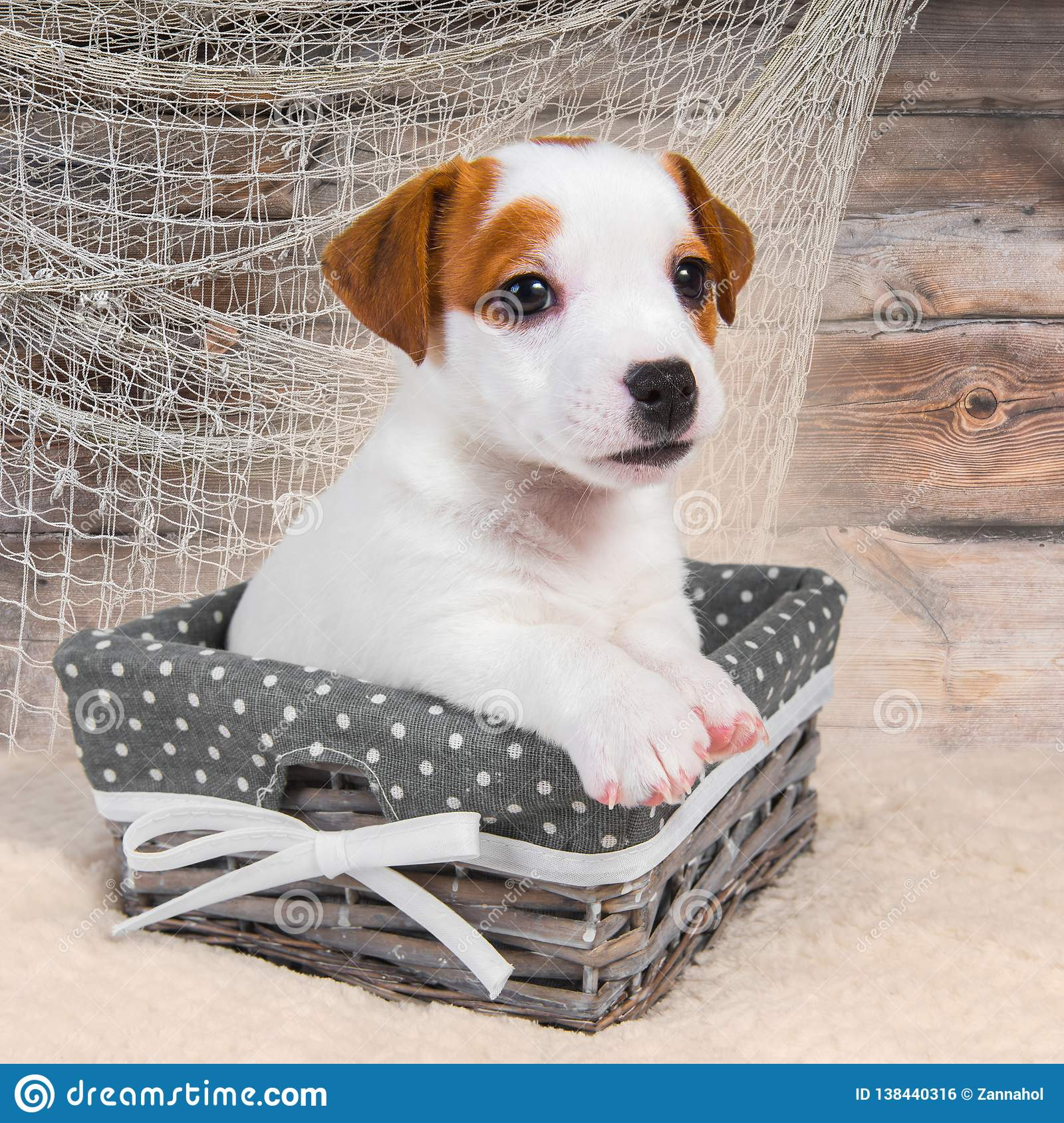 Jack Russell Terrier puppy dog in the basket on the wooden background with a fishing net.