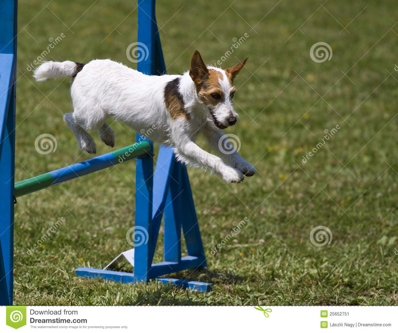 Small Dog Hurdles