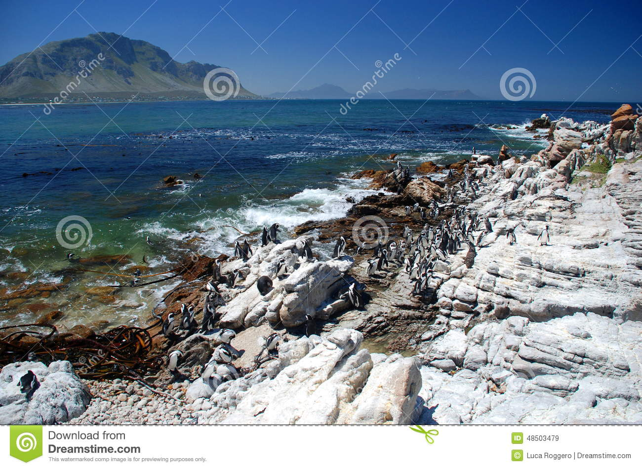 jackass penguin nature reserve betty s bay western cape south africa afrikaans bettysbaai small holiday town situated 48503479