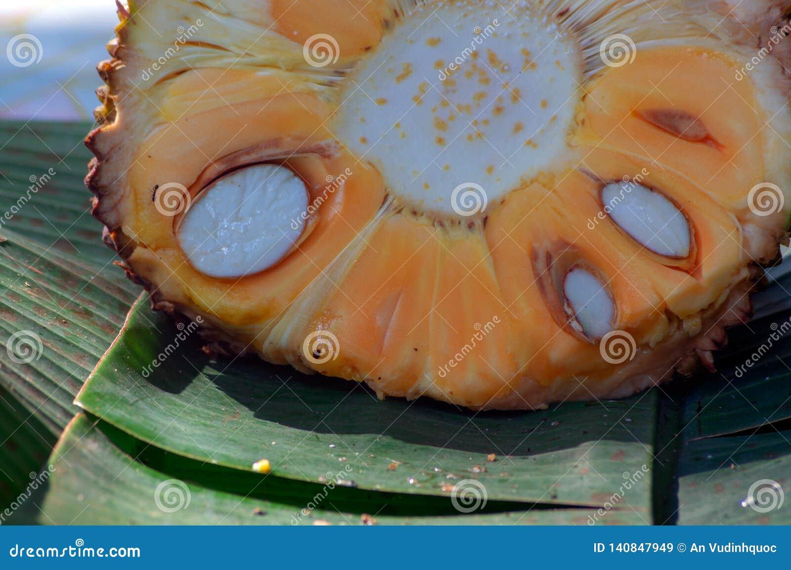 Jackfruit από την παιδική ηλικία στην ωριμότητα