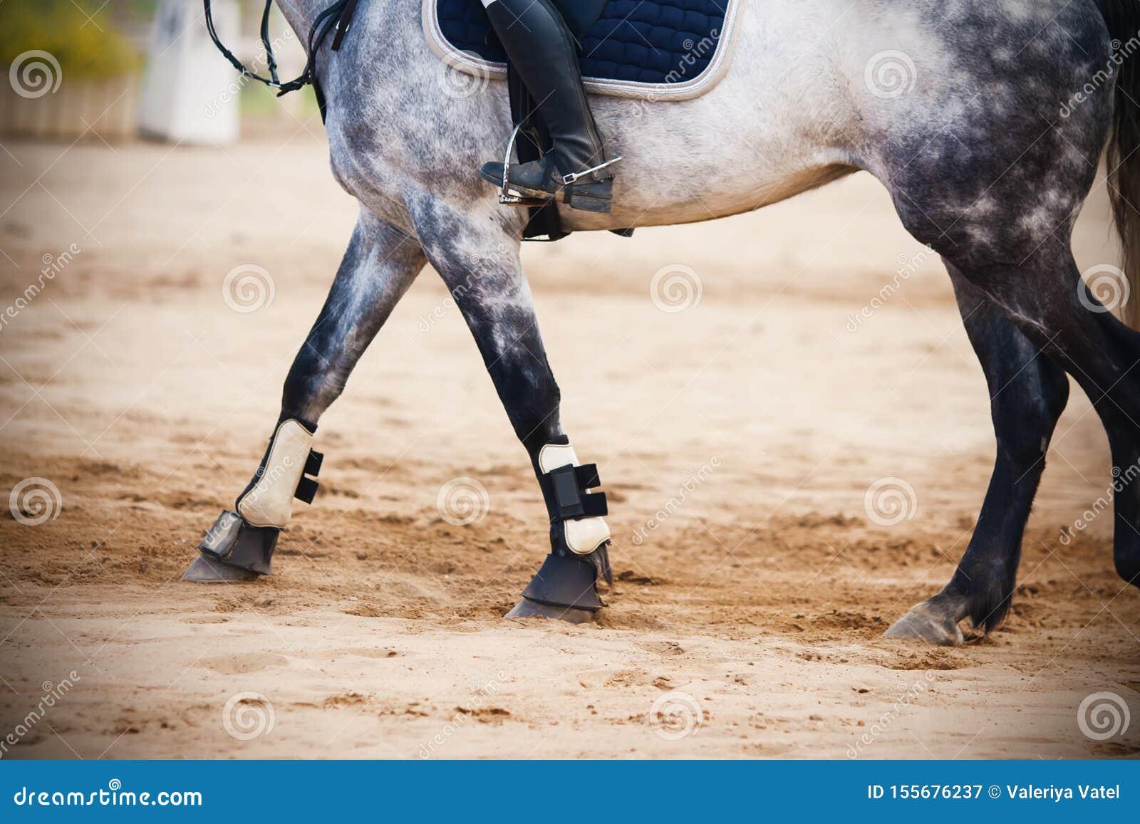 Jadący jeźdza na szarym koniu który iść przez piaskowatej areny,