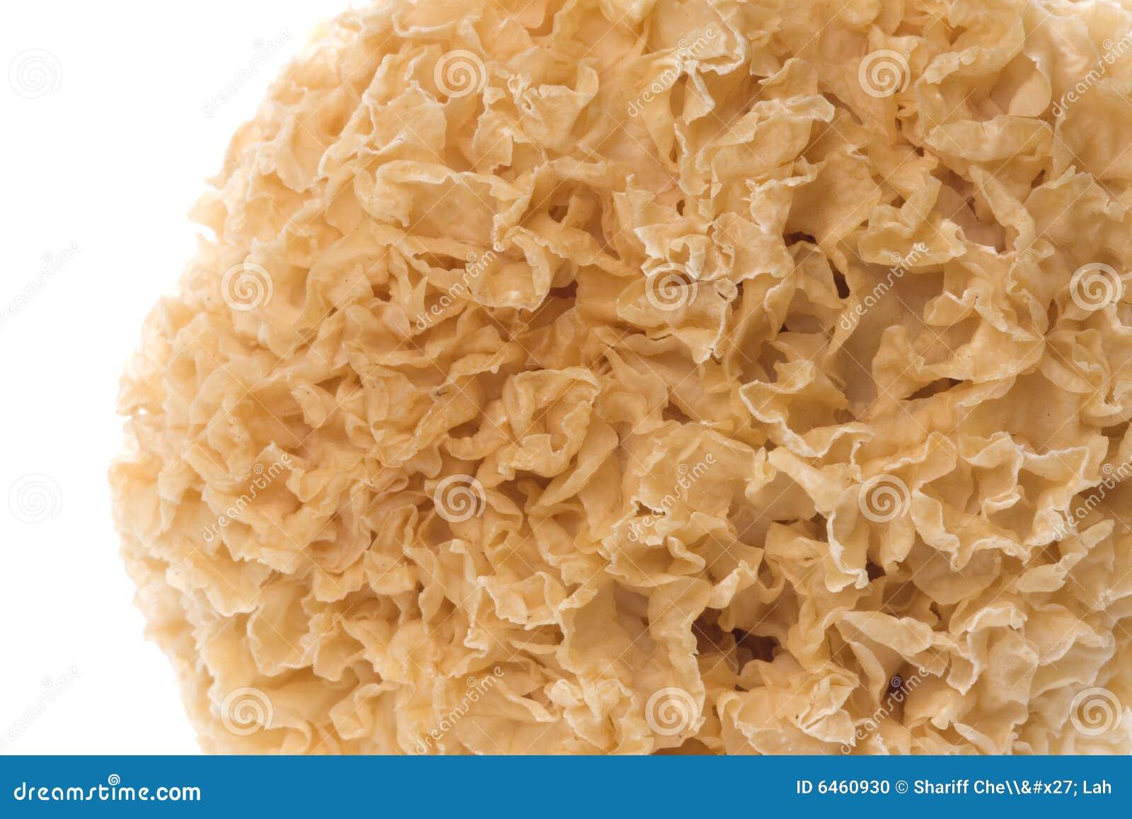 Jadalne makro grzyb white