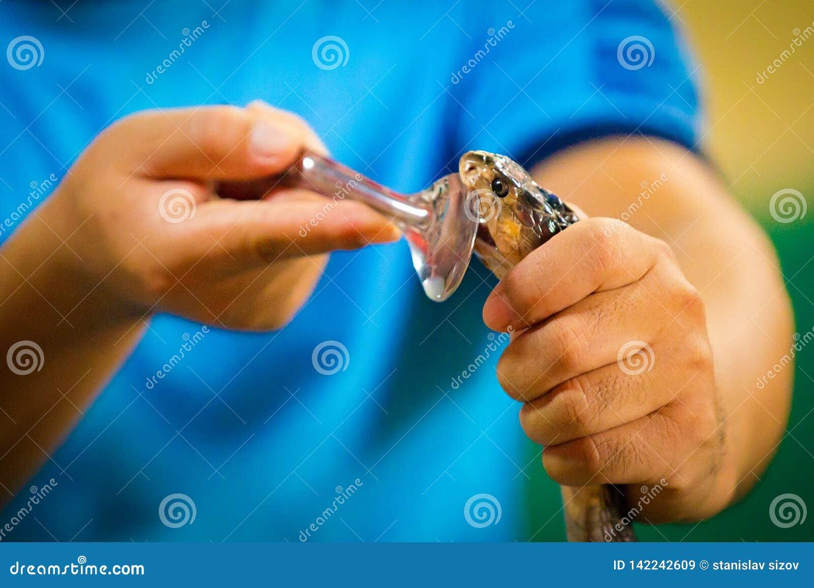 Jadowity wąż w dziecko ręce iść gryźć on