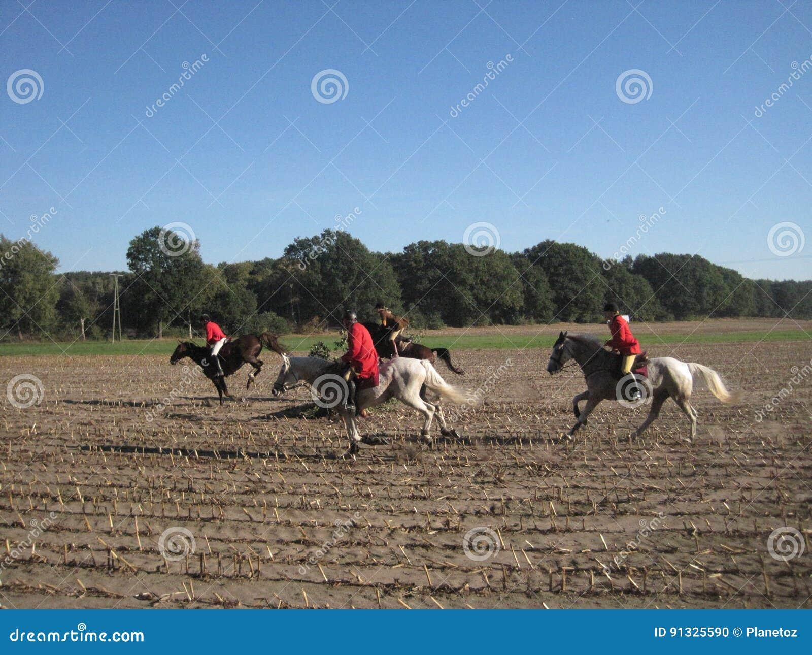 Jaga med hästar