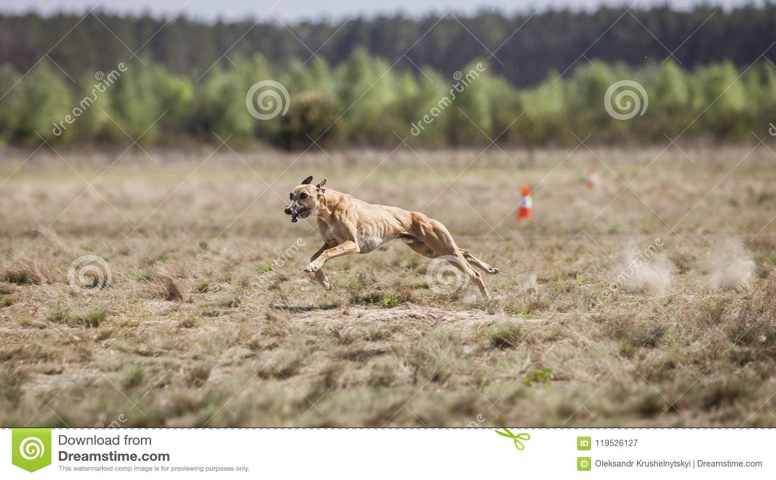 Jaga utbildning Whippethundspring på fältet