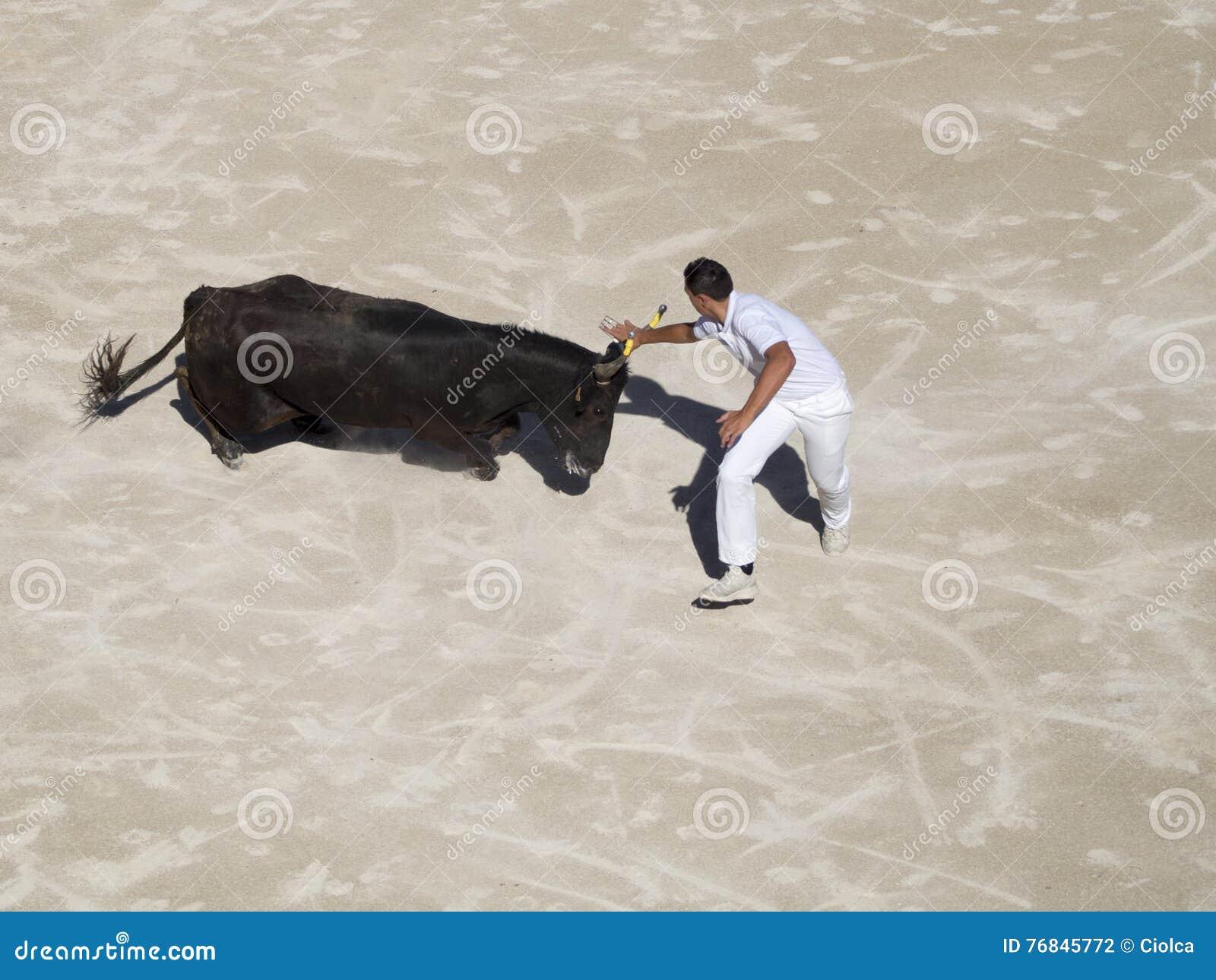 Jagat av tjuren