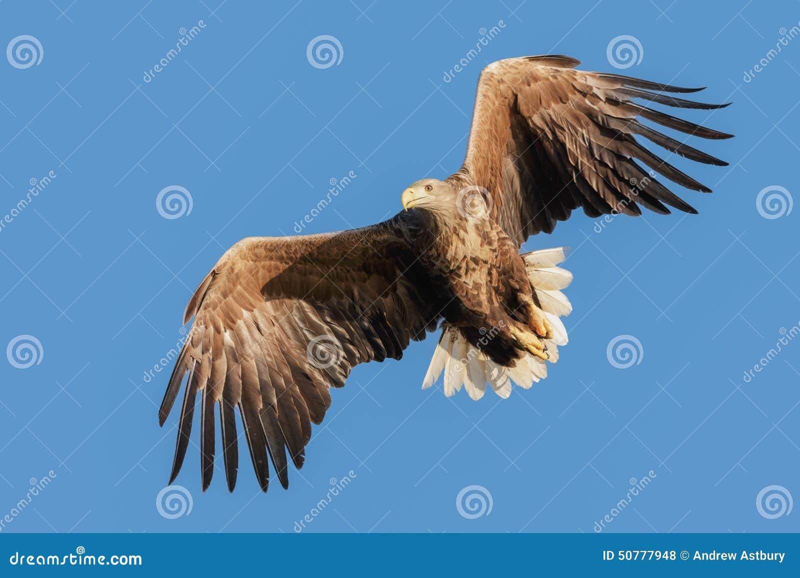Jagd-Meer Eagle
