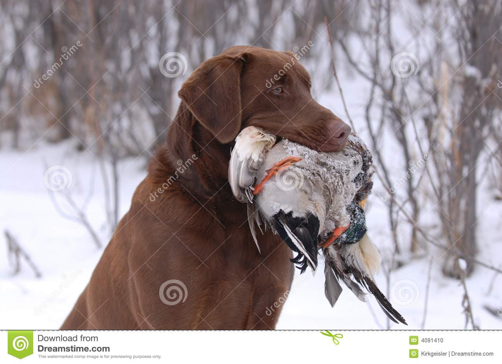 Jagdbegleiter