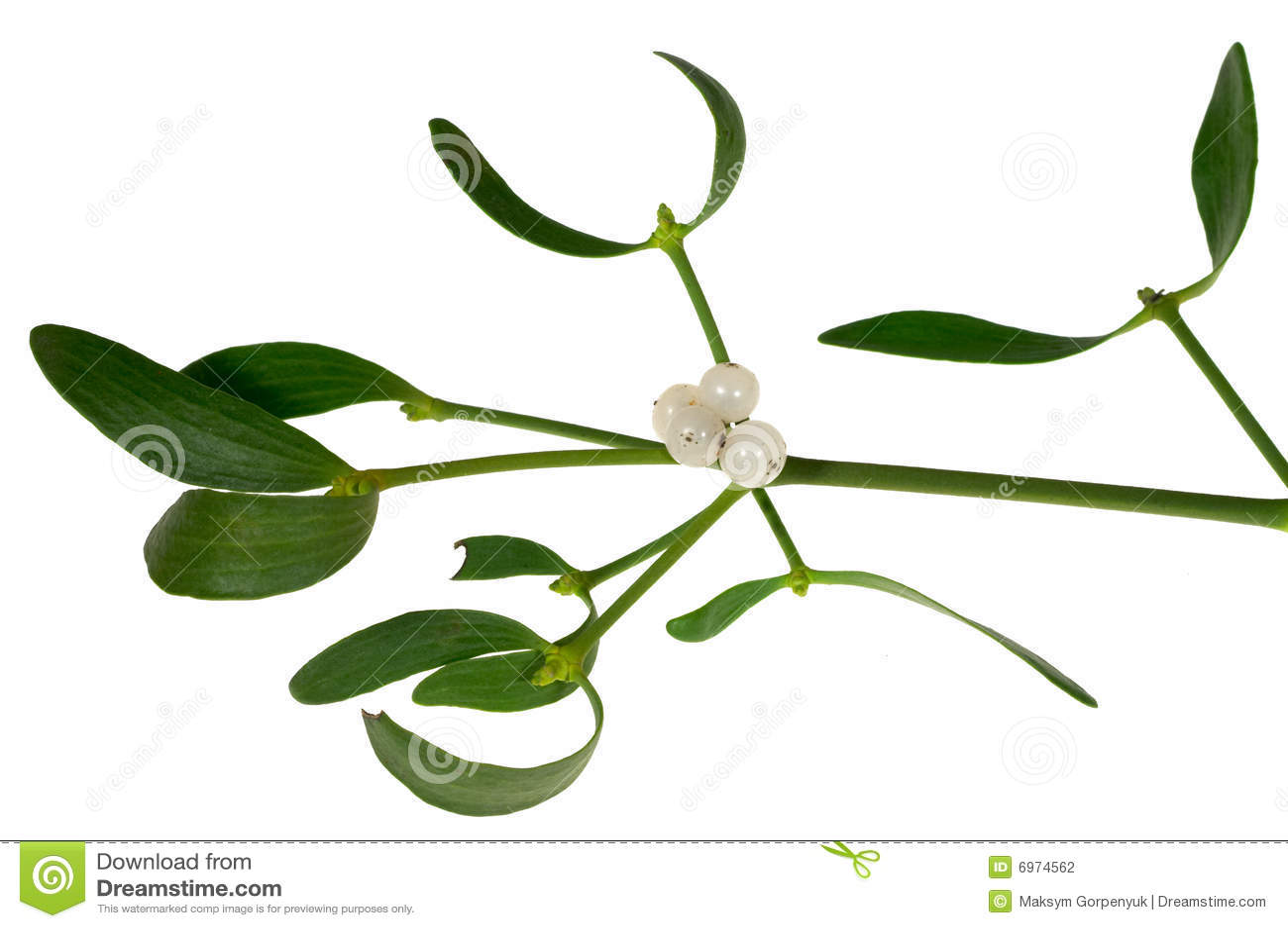 Jagod liść jemioły sprig