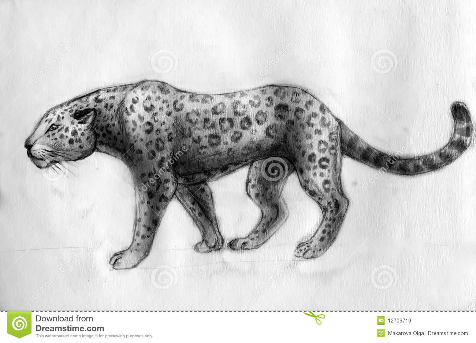 Jaguar Drawing Stock Illustration Illustration Of Animal 12709719
