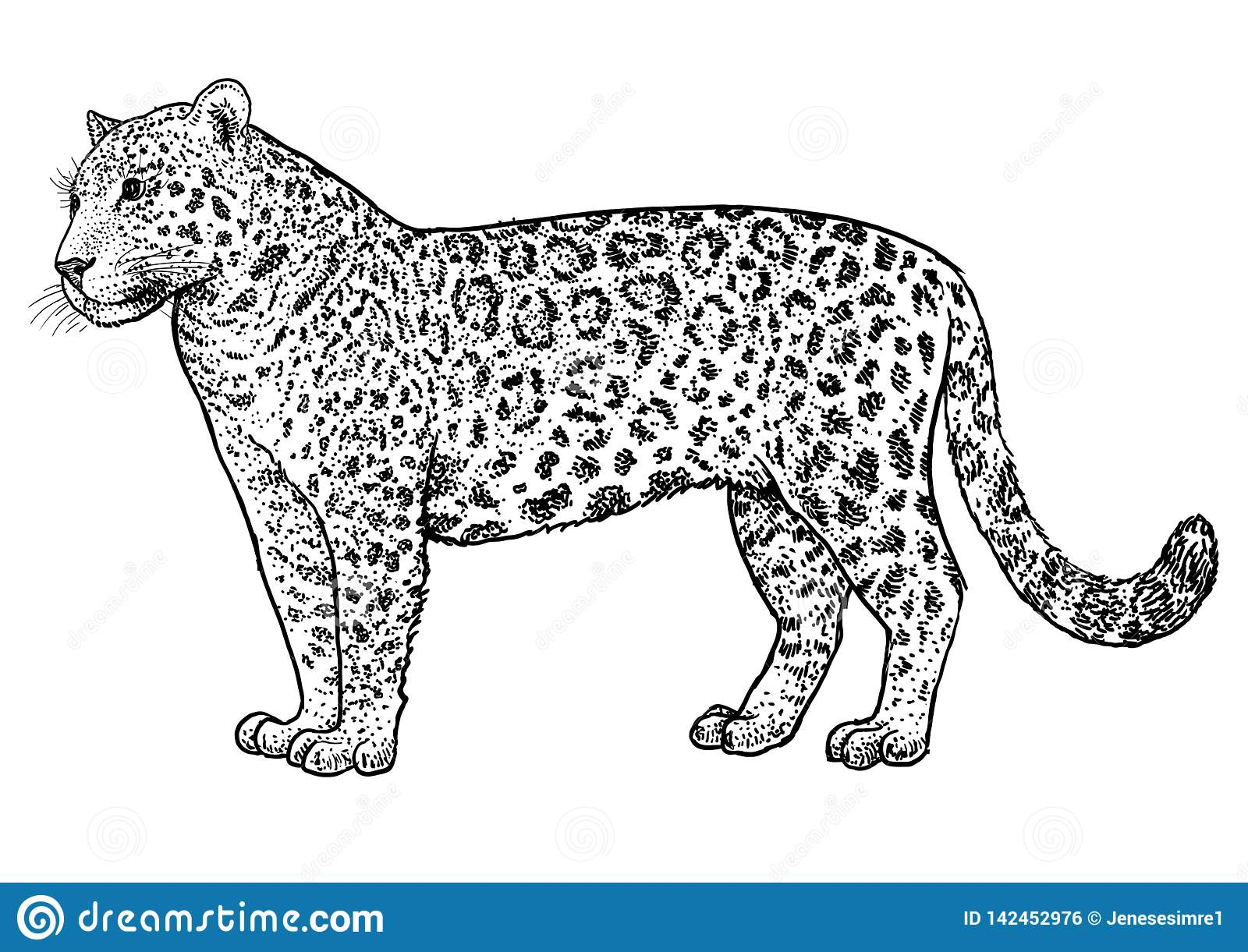 Jaguar Illustration Drawing Engraving Ink Line Art Vector Stock Vector Illustration Of Animal Endangered 142452976