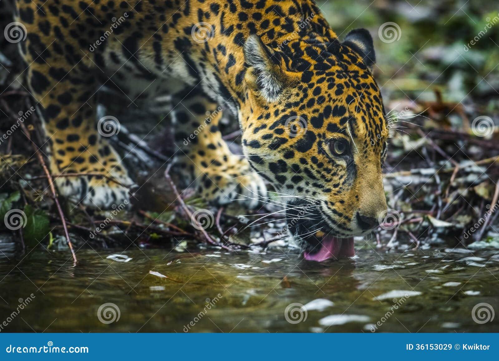 Close Up Animals Drinking Water
