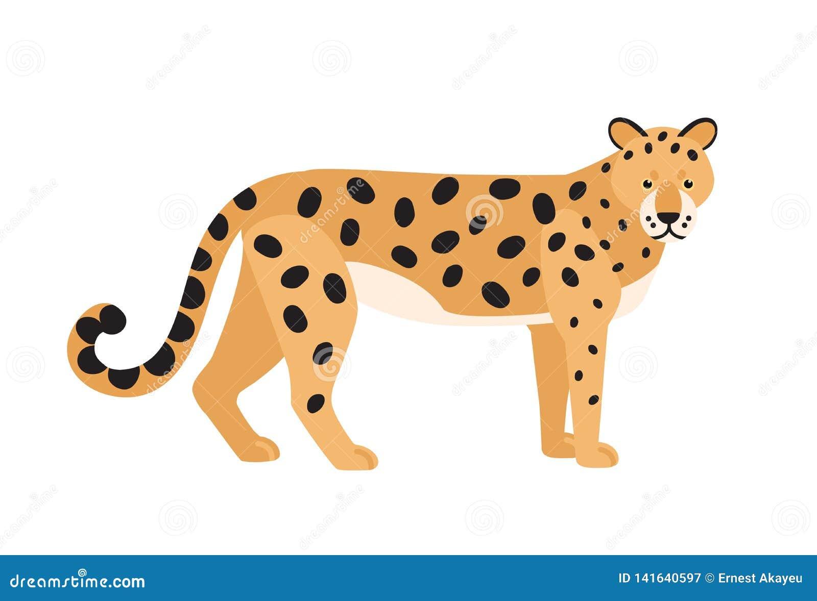 Jaguar odizolowywał na białym tle Oszałamiająco dziki egzotyczny mięsożerny zwierzę Pełen wdzięku śliczny lub