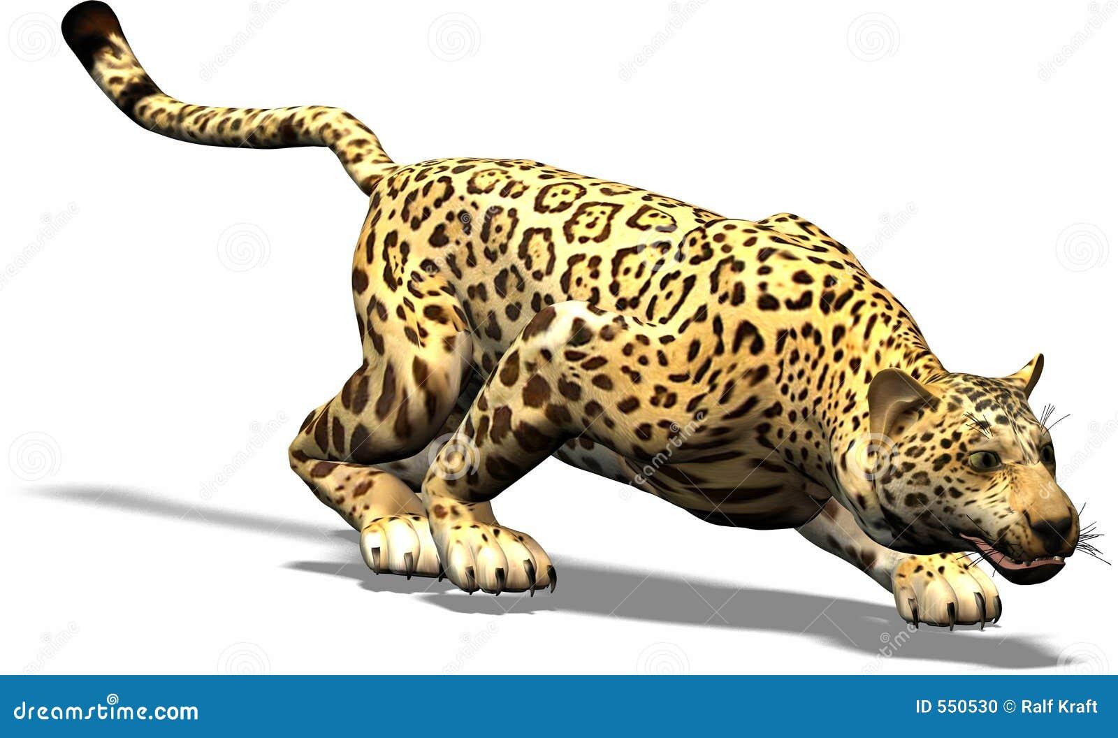 jaguar afrika with Stock Foto Jaguar Op De Jacht Image550530 on Leoparden Alles Ueber Die Stolzen Raeuber together with Fennek as well Animal Of Week Amur Leopard in addition 574 Kamel Dromedar Unterschied as well King Cheetah 357525586.