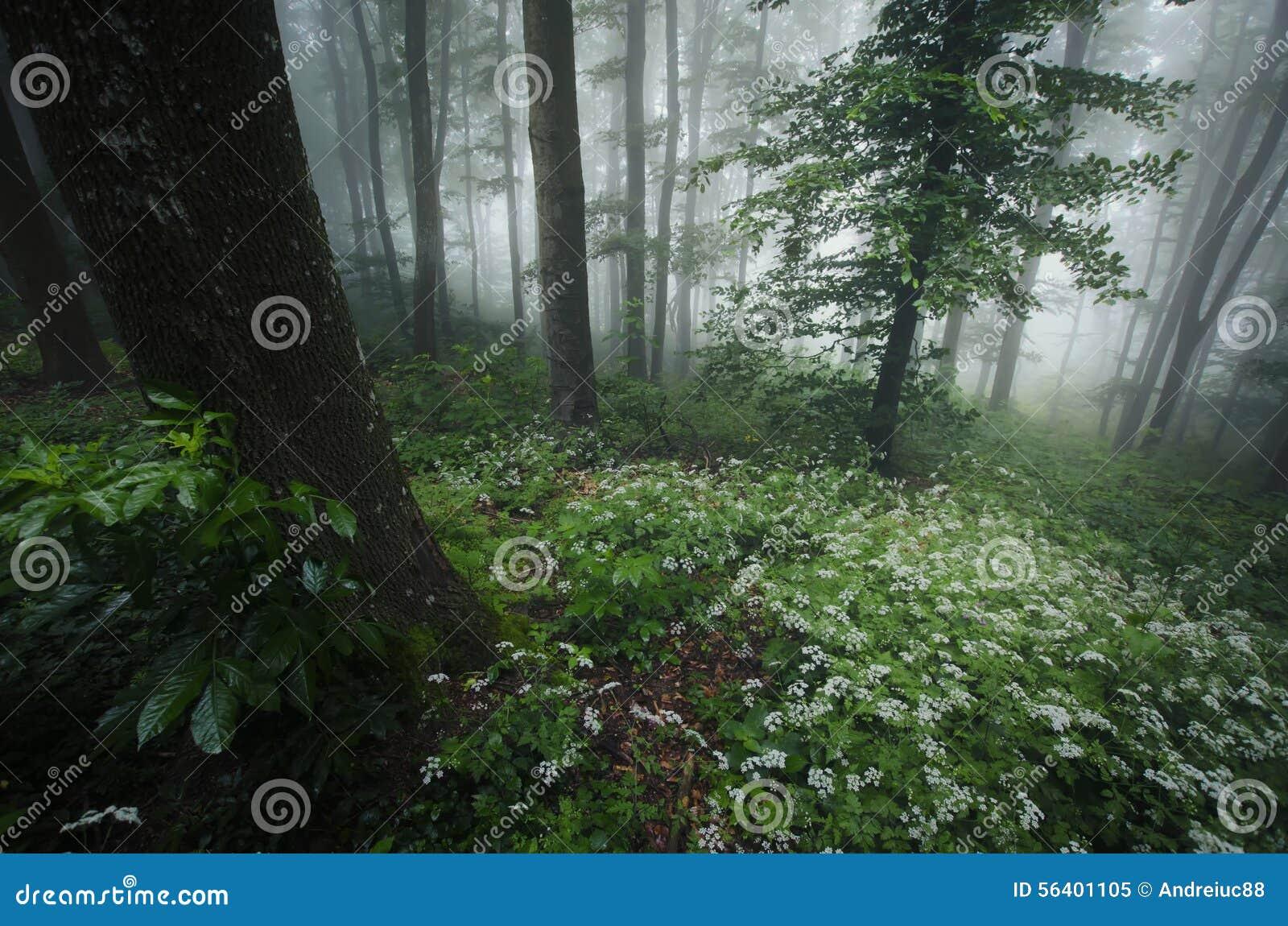 Jaillissez dans la forêt avec les fleurs blanches et le brouillard