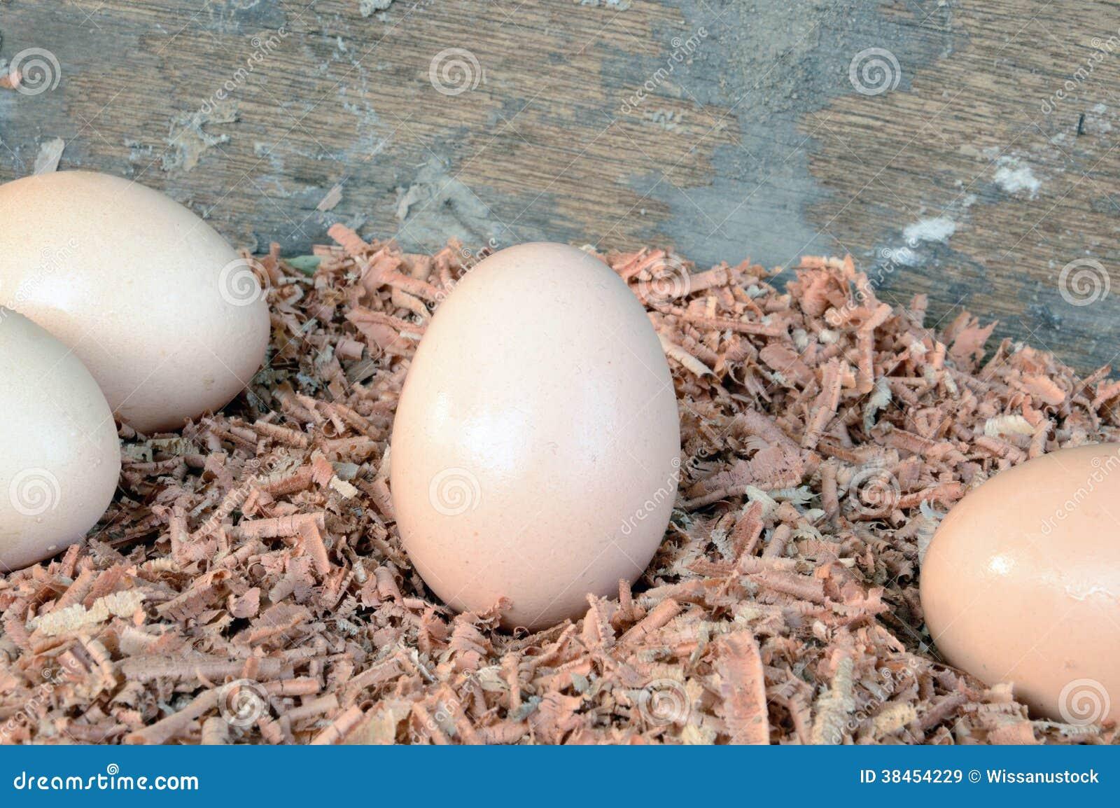 Jajka na trociny