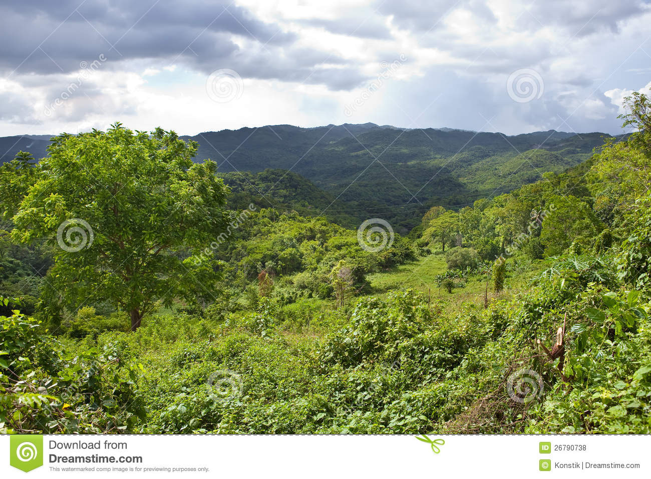 Jamaica Landscape In A Sunny Day Stock Photo Image Of Palm Tree